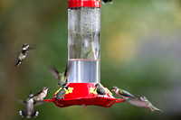 Hummers_0004