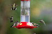 Hummers_0006