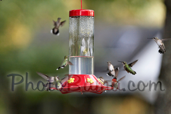 Hummers_0010
