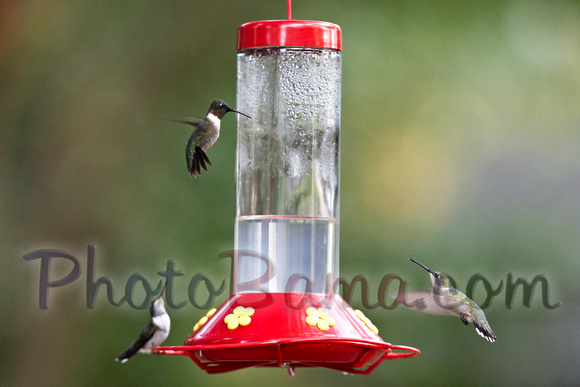 Hummers_0001