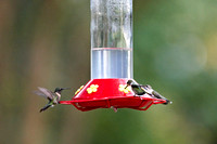 Hummers_0012